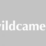 Wildcamera kopen, heb je dit nodig?